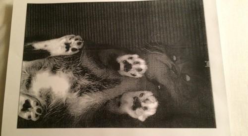 cat-photocopy1